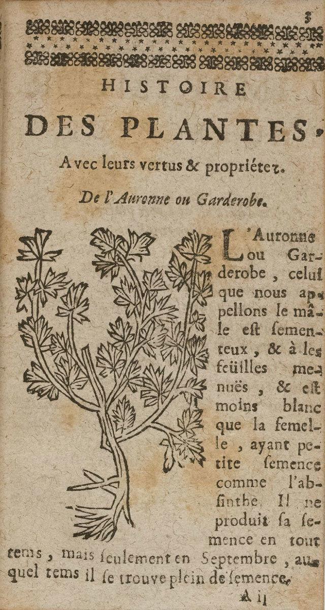 Histoire generalle des plantes et herbes [General history of plants and herbs], 1729, Leonhart Fuchs, Bibliothèque nationale de France, No Copyright - Other Known Legal Restrictions