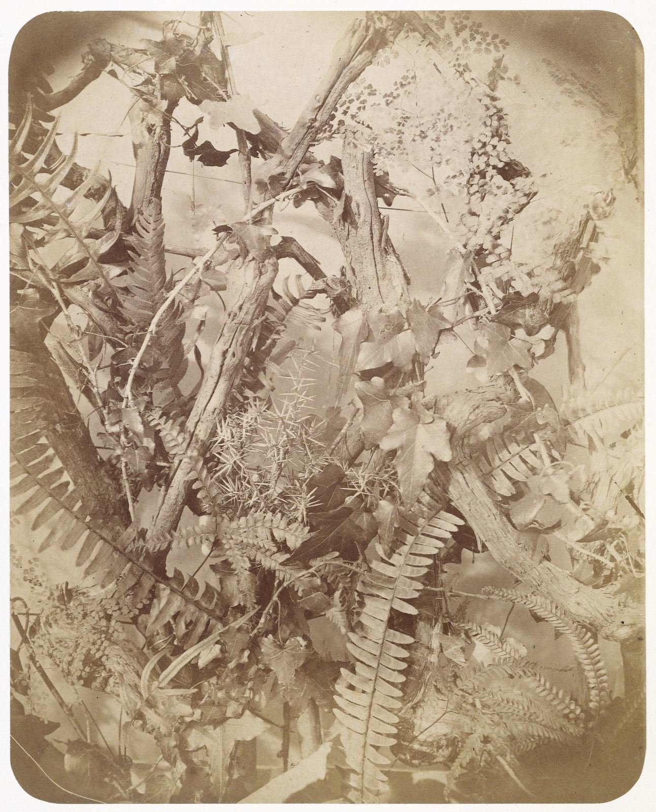 Still life with branches and ferns, 1857, Adolphe Braun, Rijksmuseum, Public Domain Mark
