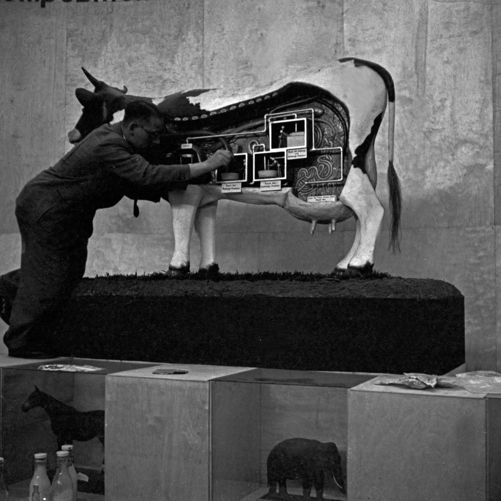 The 'Internationale Milchwirtschaftliche Ausstellung' in Berlin, 1937, Heinz Pollmann, United Archives, In Copyright