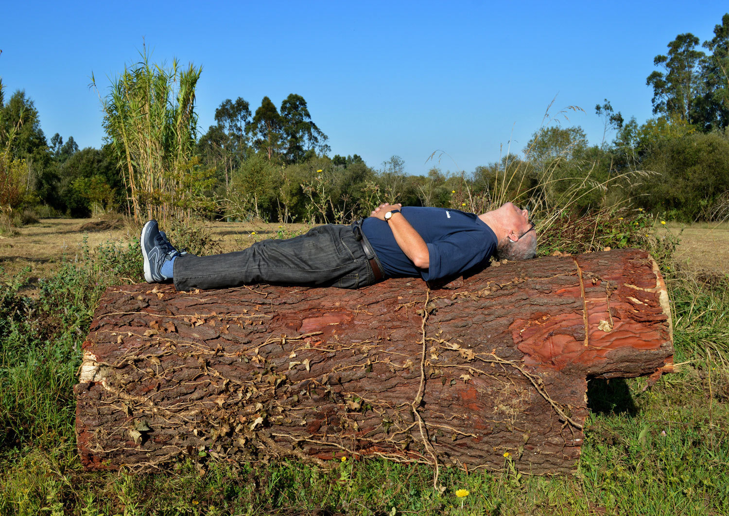 Vicente's portrait. Lying in a tree, sunbathing, Nos, Why Not?, Audiovisual Library of the European Commission, In Copyright